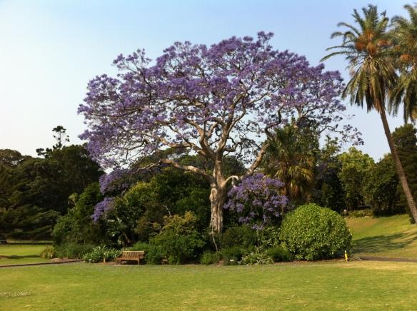 Botanic Gardens 3